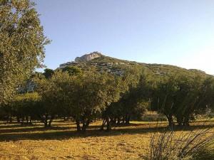 La colline du Castellas dominant un champ d'oliviers. Vue du Sud. © Jean Marie Desbois, 2009.
