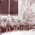 berger-troupeau