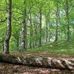 arbre-abattu-bucheron-foret