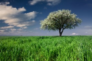 arbre-genealogique