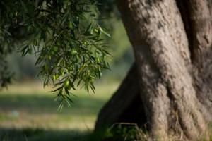 © Riccardo Bruni - Fotolia.com