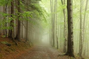 arbre-foret-sous-bois