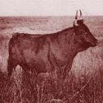 vaco-small