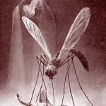 Dessin pour la prévention du paludisme. Ehrmann. Début XXe . DR.siècle.
