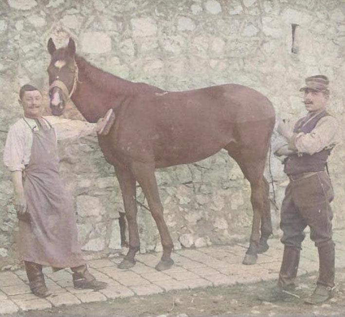 Un cheval à Marseille vers 1910. DR.
