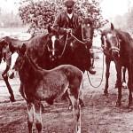 chevaux-detail